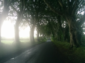 Dark Hedges - The Kings Road